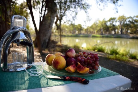 Brekky time, with the ROK and some gorgeous Riverland fruit at Katarapko Creek, Murray River National Park. Bit concerned about this morning though I have to say, cos I'm almost out of gas! EEEEK. I have enough Jack Daniel's to put me in twelve comas, food to last me weeks, sprouts to last for months, a water filter that will provide me with over 500 litres of magnificent drinking water, but gas ... nup. Bugger. I forgot to fill the gas. Twit. And yes, all the water I use for the ROK is purified by my First Need hand pump/purifier. I get the cleanest water I can out of the river or creek, and let it settle in a bucket, then hand pump to fill all my containers. Tis brilliant. Can't light a fire in this national park until April 16.